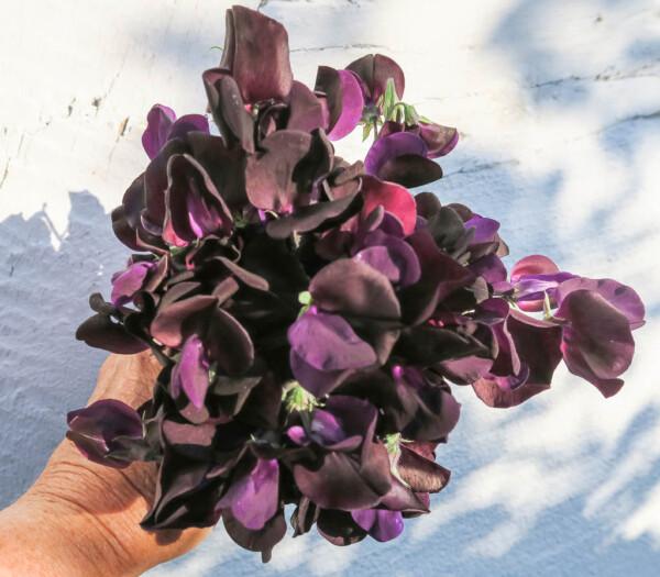 Luktärten Almost Black är svartast av de svarta.