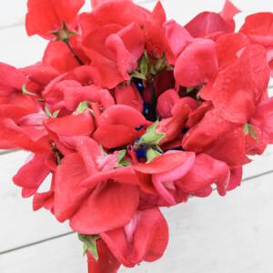 Luktärten Queen Alexandra är en rent röd sort.