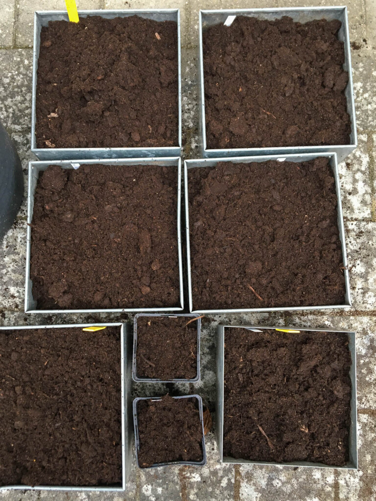 När alla knölar planterats ganska tätt fyller du jord ända upp till kanten.