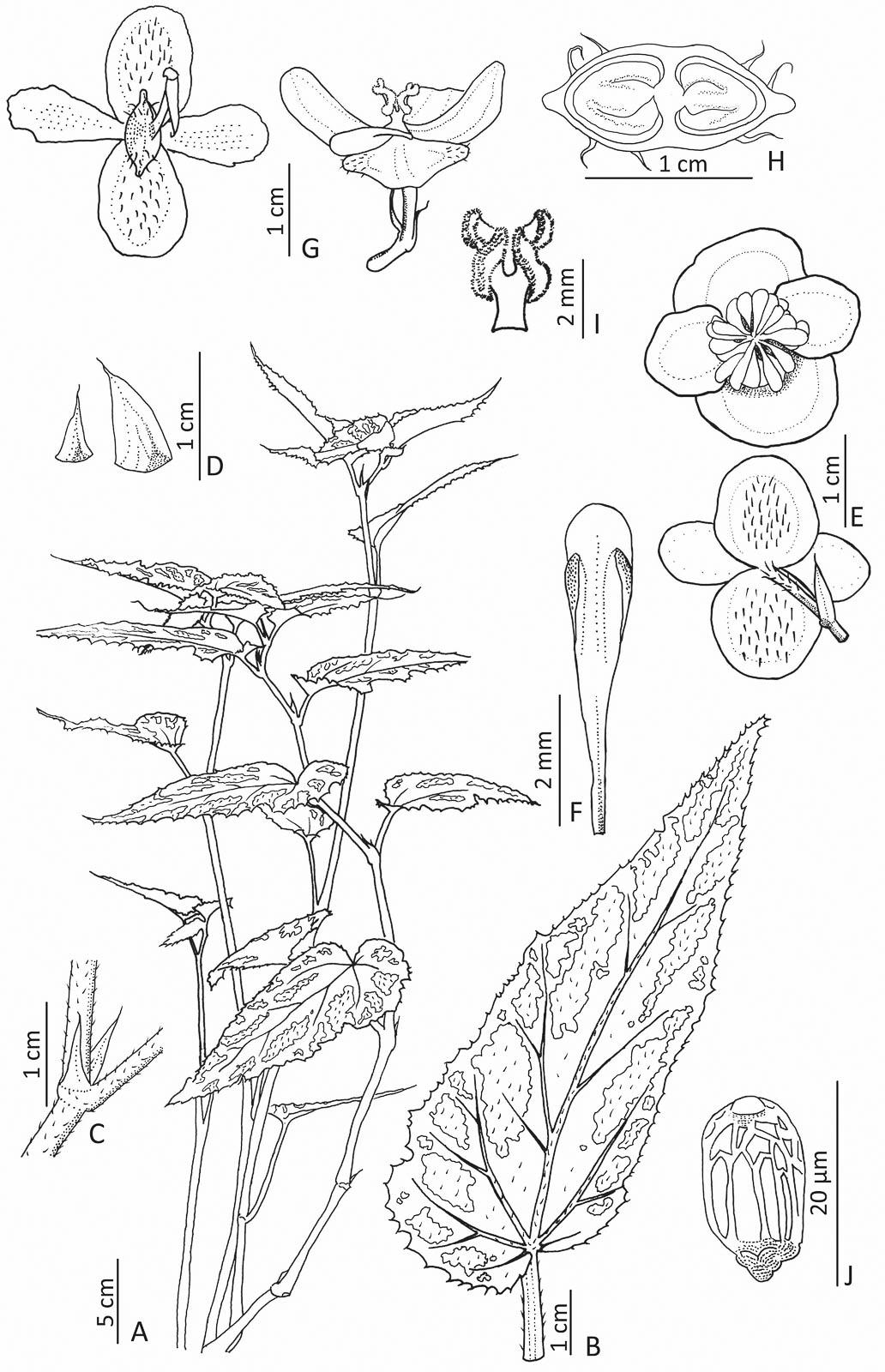 Att beskriva en ny art kräver att den noggrant återges med bilder och skisser. Detta är ingenting för den slarvige utan kräver, förutom att ta sig till ensliga platser och kanske bestiga berg, dessutom ett sinne för det analytiska och kunskap om va